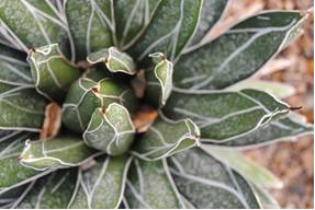 Plant 2 1